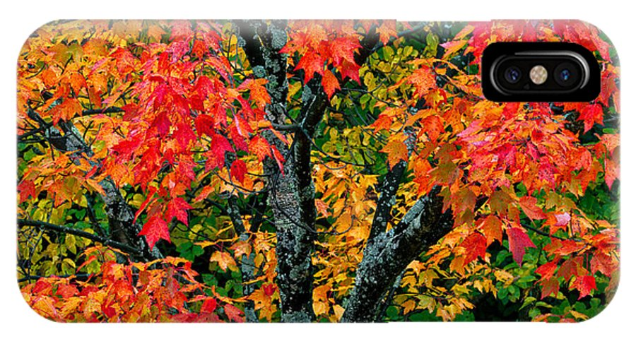 Autumn IPhone X Case featuring the photograph Autumn Maple Bark by Shell Ette