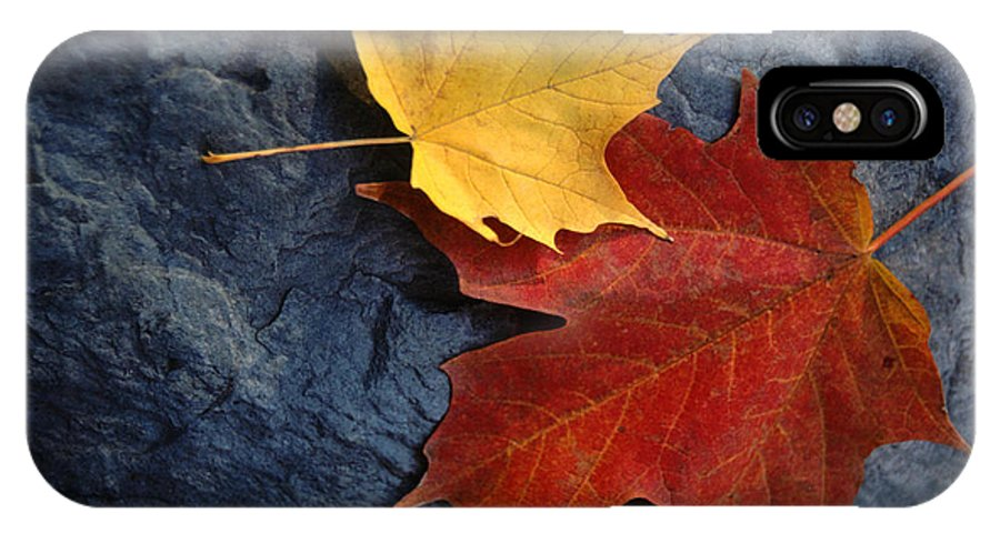 Leaf IPhone Case featuring the photograph Autumn Maple Leaf Pair On Moody Rock by Anna Lisa Yoder