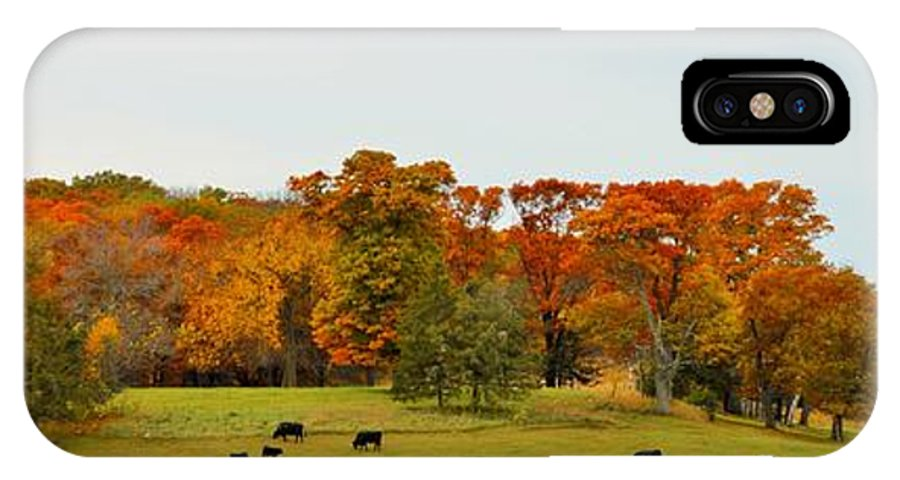 Autumn IPhone X Case featuring the photograph Autumn Minnesota Black Angus Cattle by Kimberly Benedict