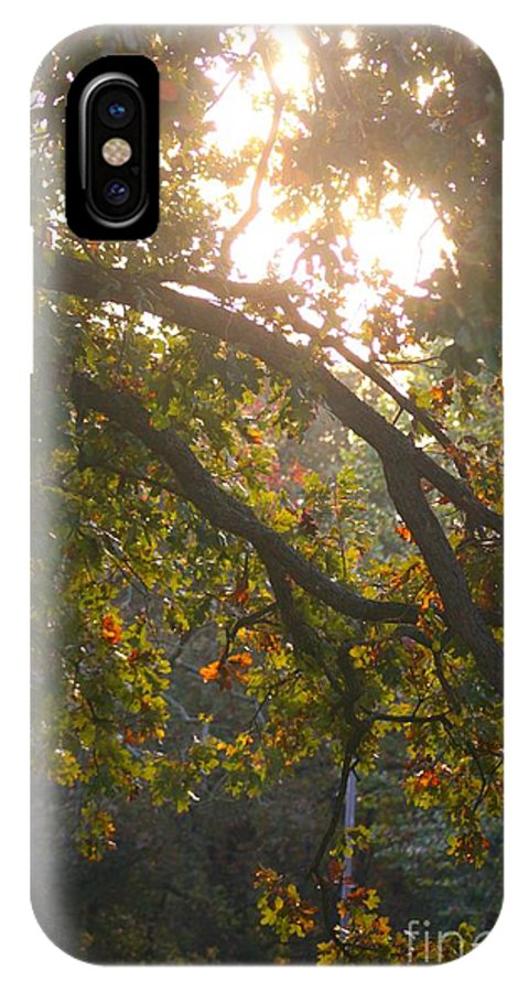 Autumn IPhone Case featuring the photograph Autumn Morning Glow by Nadine Rippelmeyer