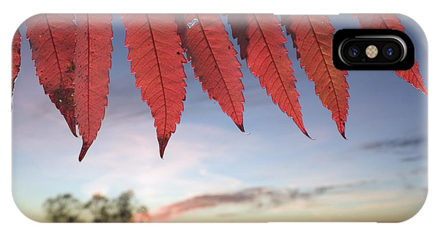 Tallgrass Prairie National Preserve IPhone X Case featuring the photograph Autumn Red Sumac Leaves by Jim Richardson