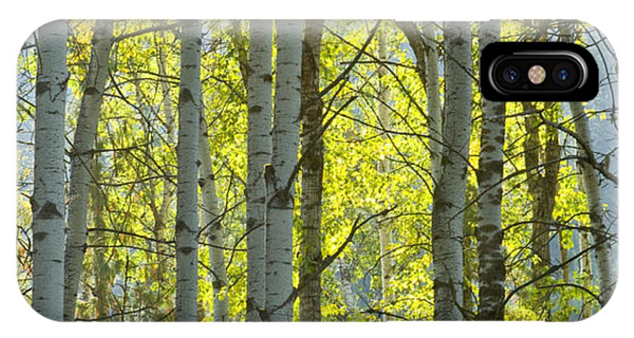 Trees IPhone X Case featuring the photograph Autumn Through The Trees by Idaho Scenic Images Linda Lantzy