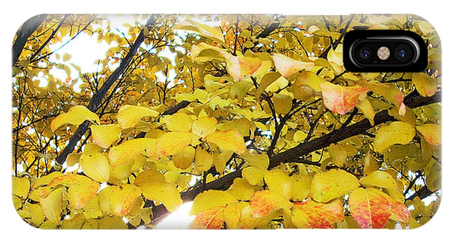 Fall Pictures IPhone X / XS Case featuring the photograph Autumns Gold by Karin Dawn Kelshall- Best