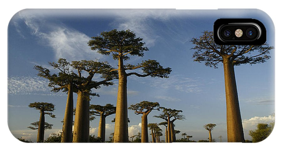 Madagascar IPhone X Case featuring the photograph Avenue Des Baobabs by Michele Burgess