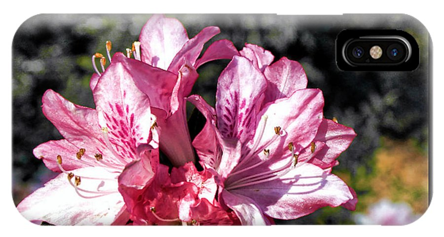 Plants IPhone X Case featuring the photograph Azalea by Thomas Fields