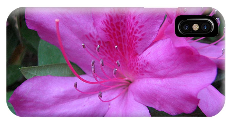 Azalea IPhone X Case featuring the photograph Azaleas IIi by Stacey May