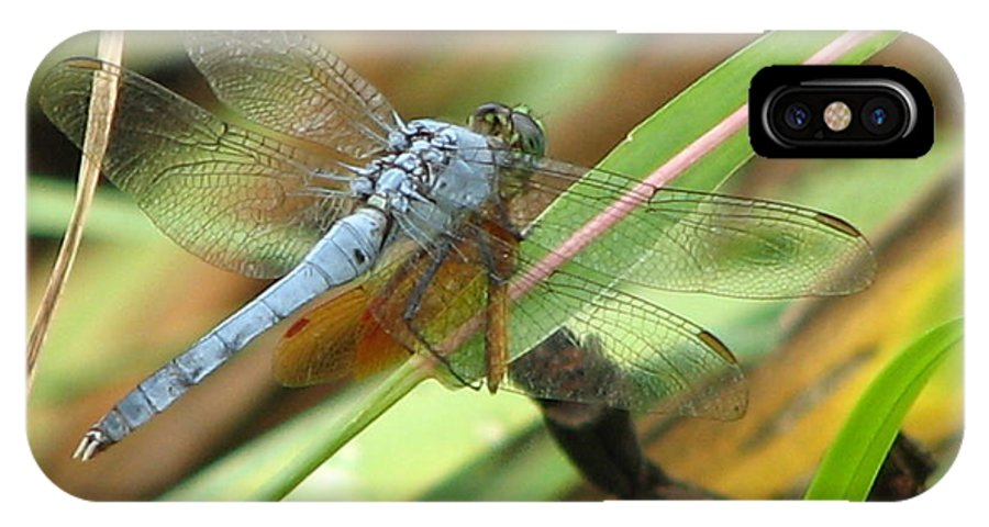 Bug IPhone Case featuring the photograph Azure Dragonfly 1 by David Dunham