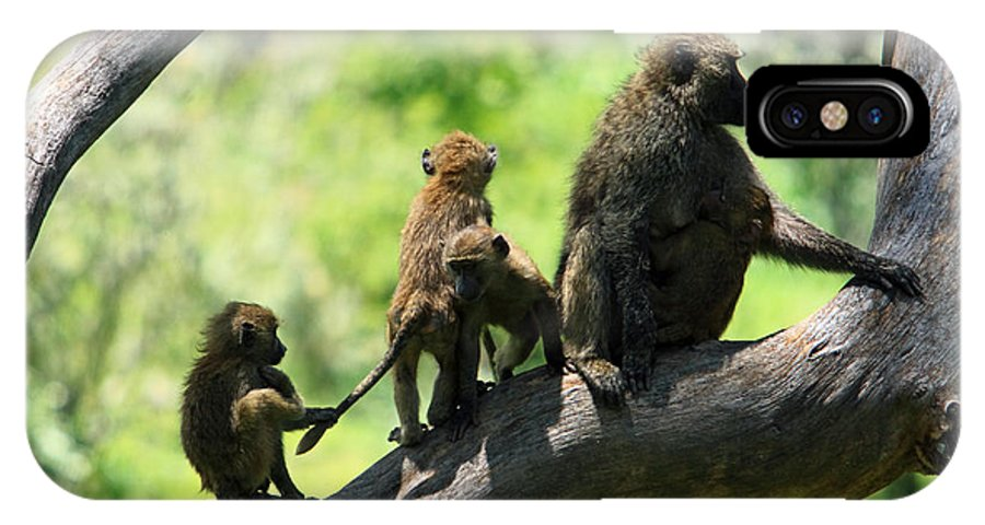 Baboon IPhone X Case featuring the photograph Baboon Family by Aidan Moran