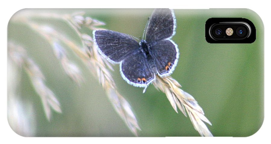 Bug IPhone X / XS Case featuring the photograph Baby Blue by David Dunham