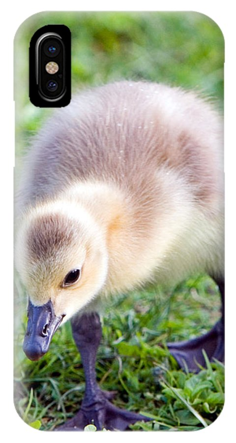 Canada Goose IPhone X Case featuring the photograph Baby Canada Goose by Randall Ingalls