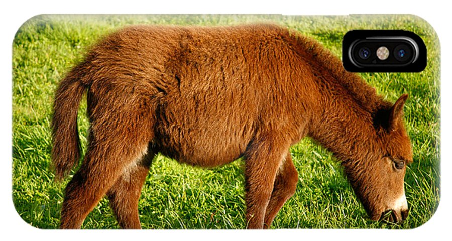 Animals IPhone Case featuring the photograph Baby Donkey by Gaspar Avila