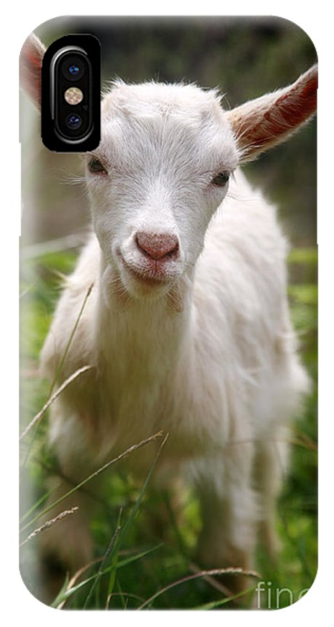 Animals IPhone Case featuring the photograph Baby Goat by Gaspar Avila