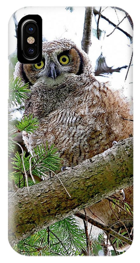 Great Horned Owl IPhone X Case featuring the photograph Baby Great Horned Owl by Peggy Collins