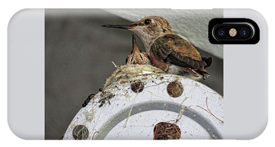 Hummingbirds IPhone X Case featuring the photograph Baby Hummers 2 by Helaine Cummins
