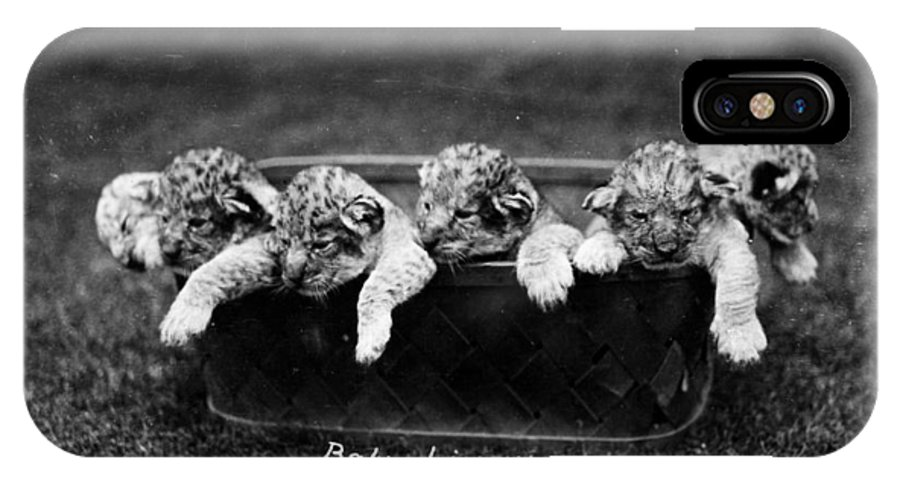 1890 IPhone X Case featuring the photograph Baby Lions, C1900 by Granger