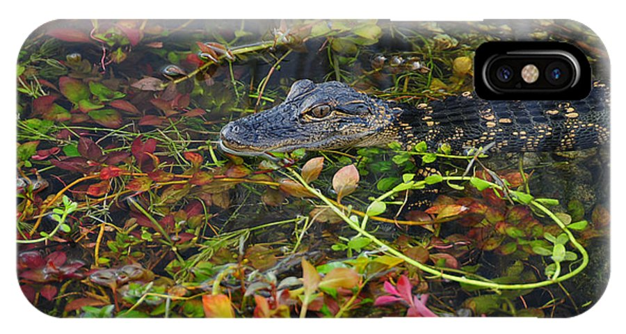 Animals Gators Fauna Florida IPhone X Case featuring the photograph Baby by LOsorio Photography