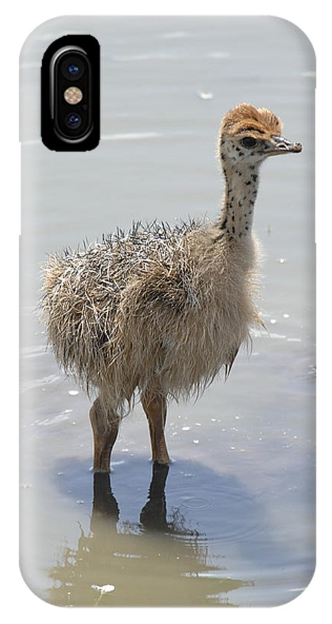 Ostrich IPhone X Case featuring the photograph Baby Ostrich by Keith Lovejoy