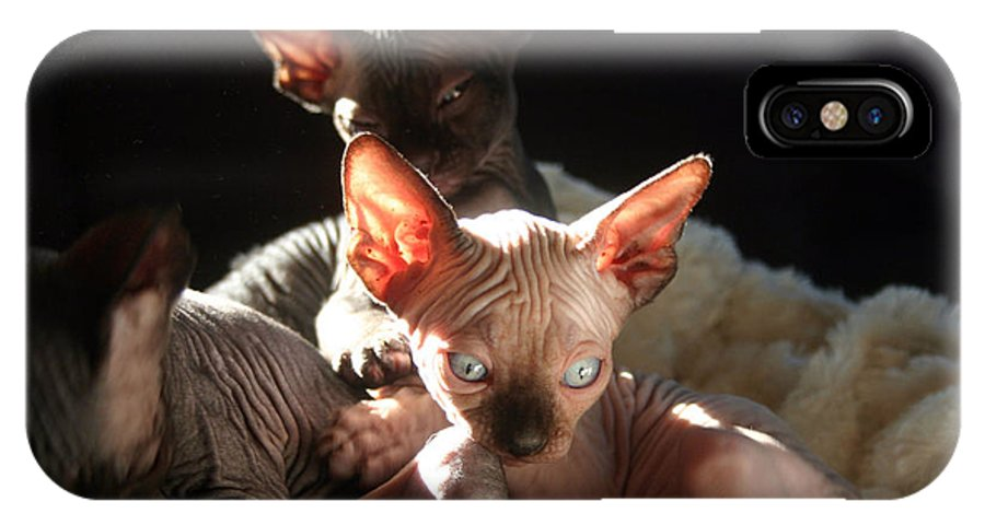 Photo IPhone X Case featuring the photograph Baby Sphynx Cats by Ruben Flanagan
