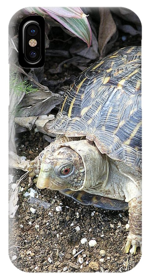 Mary Deal IPhone X Case featuring the photograph Baby Tortoise by Mary Deal