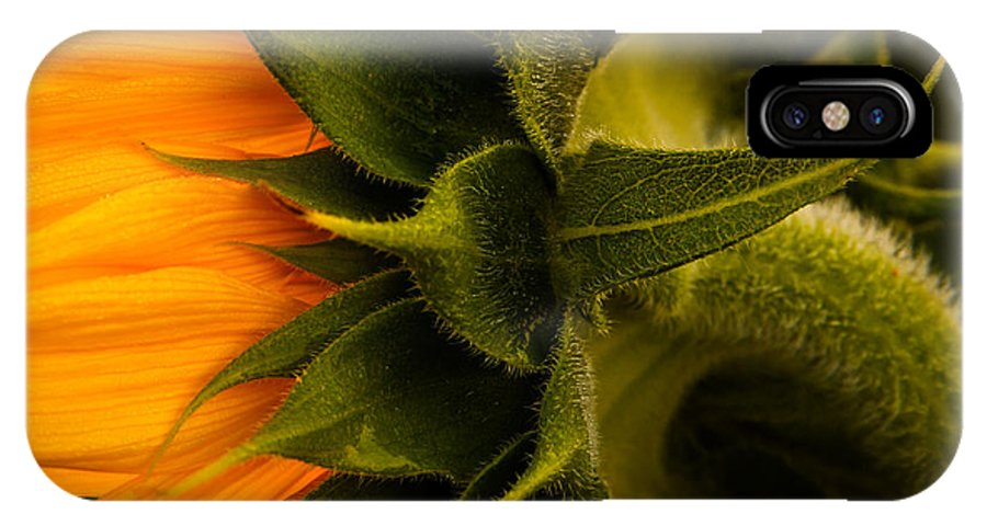 Flower Head IPhone X Case featuring the photograph Back Angle Of Sunflower by Tommy Brison