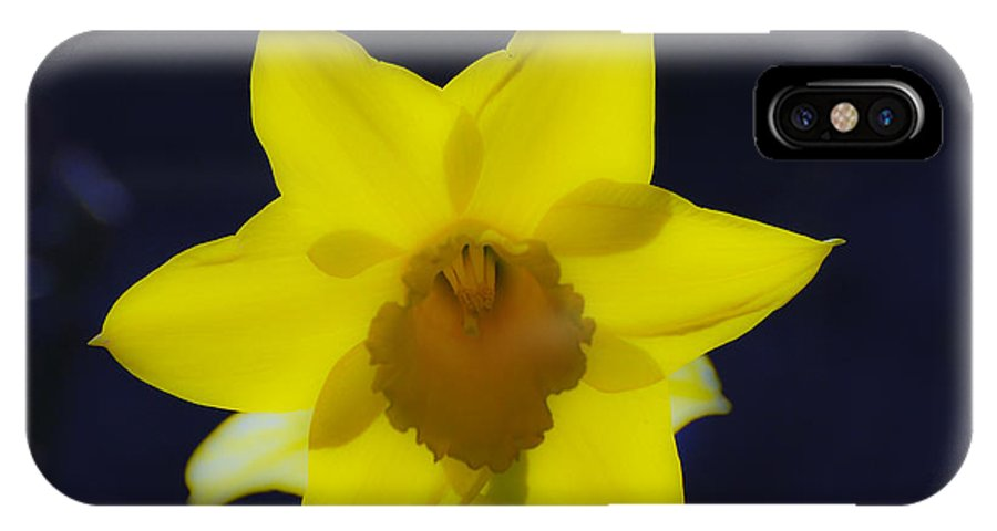 Yellow IPhone X Case featuring the photograph Back Lit Daffodil by Larry Keahey