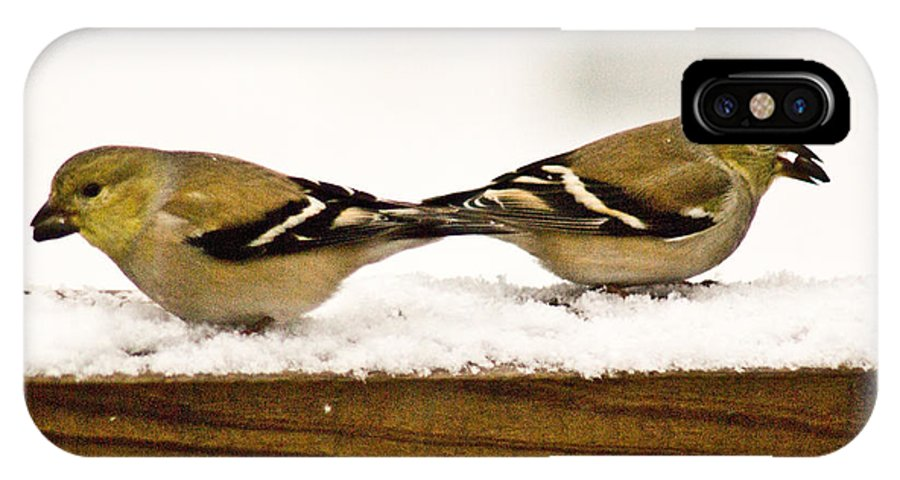 American IPhone Case featuring the photograph Back To Back American Gold Finches by Douglas Barnett
