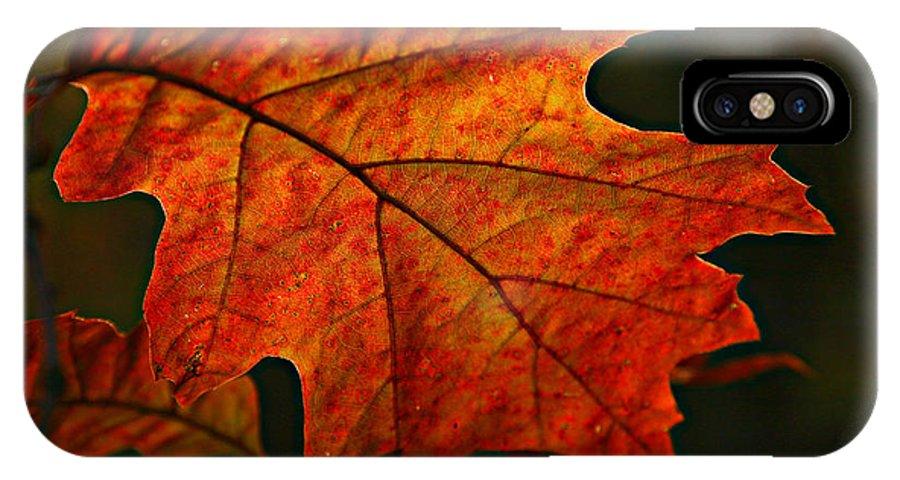 Fall Oak Leaf Leaves Orange Red IPhone X Case featuring the photograph Backlit Leaf by Shari Jardina
