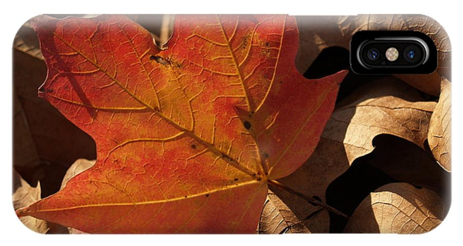 Leaf IPhone X Case featuring the photograph Backlit Sugar Maple Leaf In Dried Leaves by Anna Lisa Yoder
