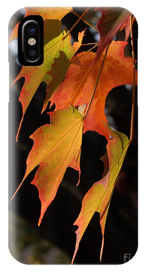 Leaf IPhone Case featuring the photograph Backlit Sugar Maple Leaves With Trunk by Anna Lisa Yoder
