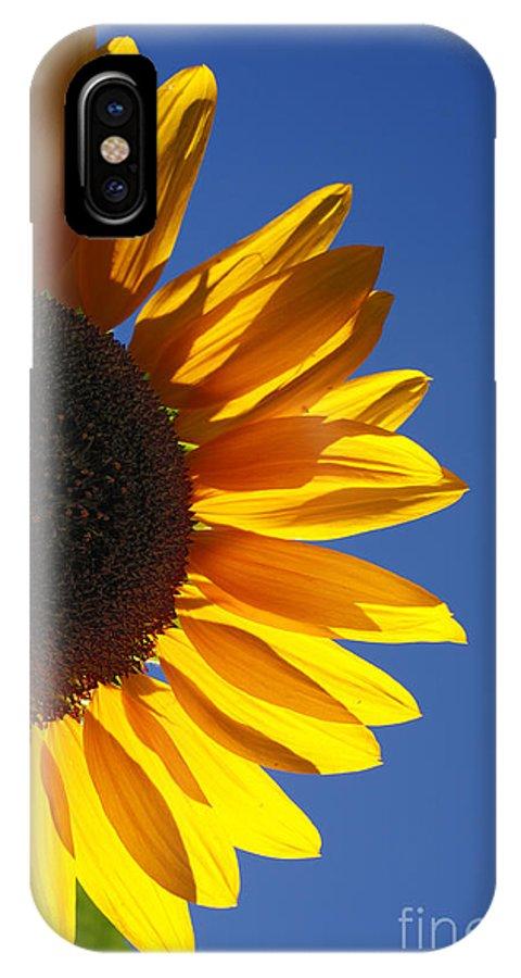 Back Light IPhone Case featuring the photograph Backlit Sunflower by Gaspar Avila