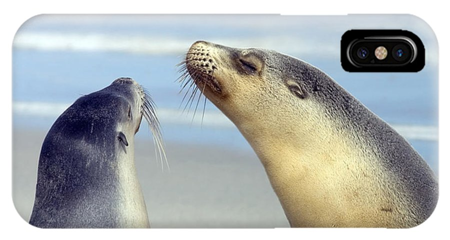 Sea Lion IPhone X Case featuring the photograph Backtalk by Mike Dawson