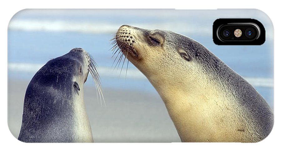 Sea Lion IPhone Case featuring the photograph Backtalk by Mike Dawson