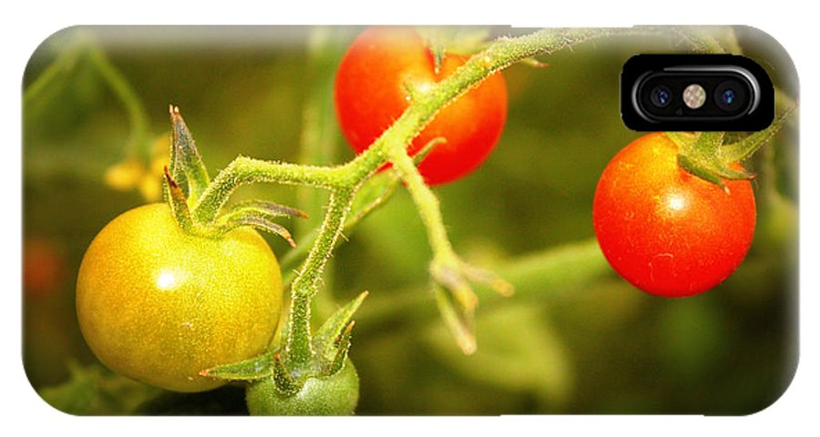 Food IPhone X Case featuring the photograph Backyard Garden Series - Cherry Tomatoes by Carol Groenen