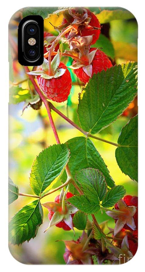 Fresh Fruit IPhone X Case featuring the photograph Backyard Garden Series - Sunlight On Raspberries by Carol Groenen