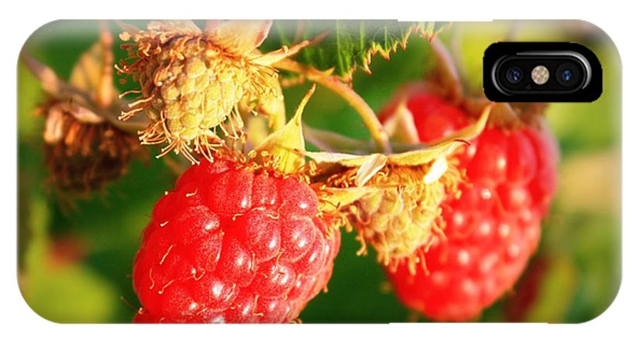Food IPhone X Case featuring the photograph Backyard Garden Series - Two Ripe Raspberries by Carol Groenen
