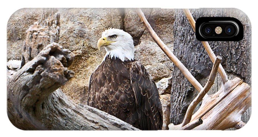Bald Eagle IPhone X Case featuring the photograph Bald Eagle by Douglas Barnett