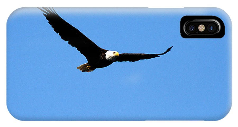 Eagle IPhone X Case featuring the photograph Bald Eagle II by Thomas Marchessault