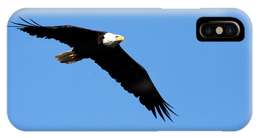 Eagle IPhone X Case featuring the photograph Bald Eagle IIi by Thomas Marchessault