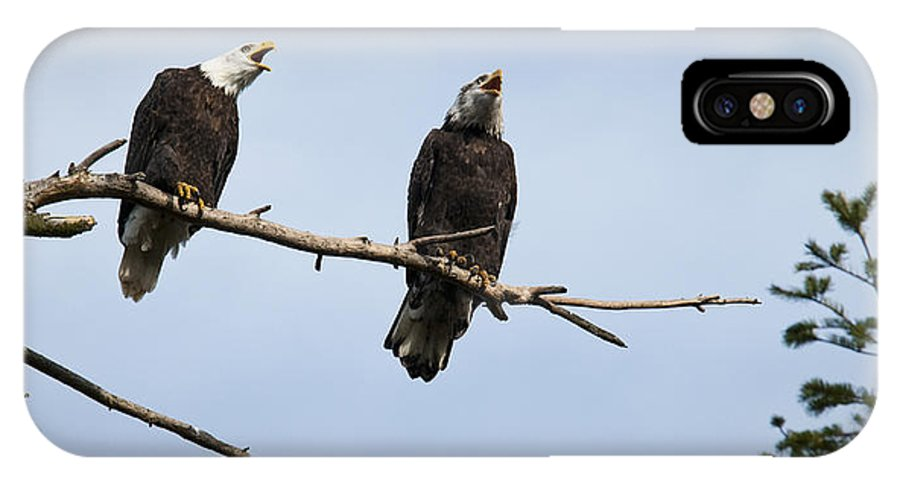 Bald Eagle IPhone X Case featuring the photograph Bald Eagle Music by Chad Davis