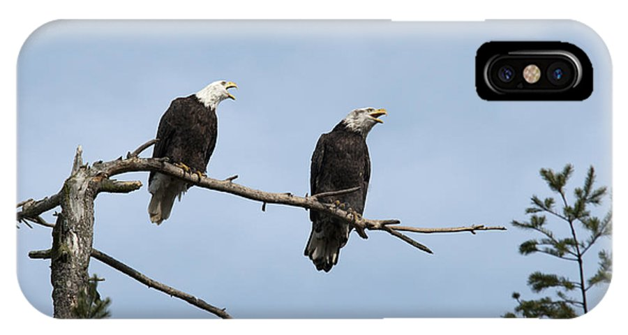 Bald Eagle IPhone X Case featuring the photograph Bald Eagle Perch by Chad Davis