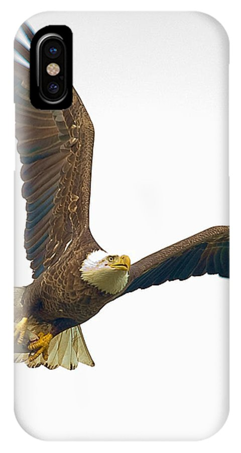Eagle IPhone X Case featuring the photograph Bald Eagle With Fish by William Jobes