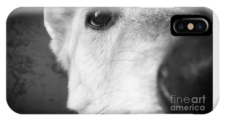 Balti IPhone X Case featuring the photograph Balti by Pruddygurl Exclusives