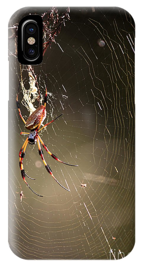 Banana Spider IPhone X Case featuring the photograph Banana Spider by Matt Suess