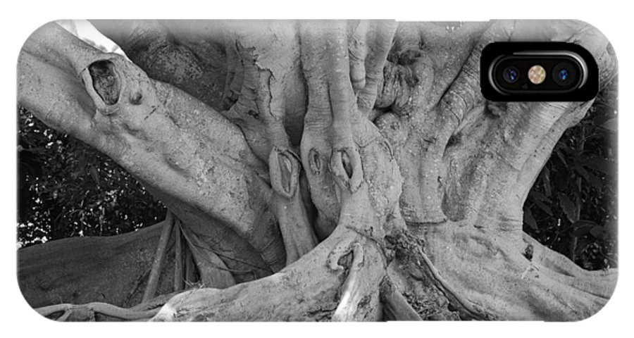 Tree IPhone X Case featuring the photograph Banyan Tree by Rob Hans