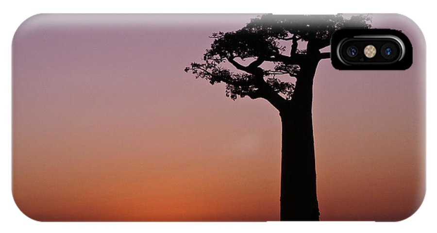 Madagascar IPhone X Case featuring the photograph Baobab At Sunset by Michele Burgess