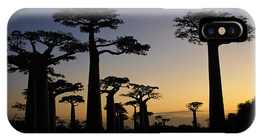 Madagascar IPhone X Case featuring the photograph Baobab Forest At Sunset by Michele Burgess