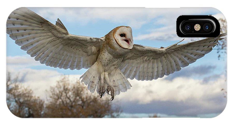 Barn Owl IPhone X Case featuring the photograph Barn Owl Makes A Happy Landing by Tony Hake