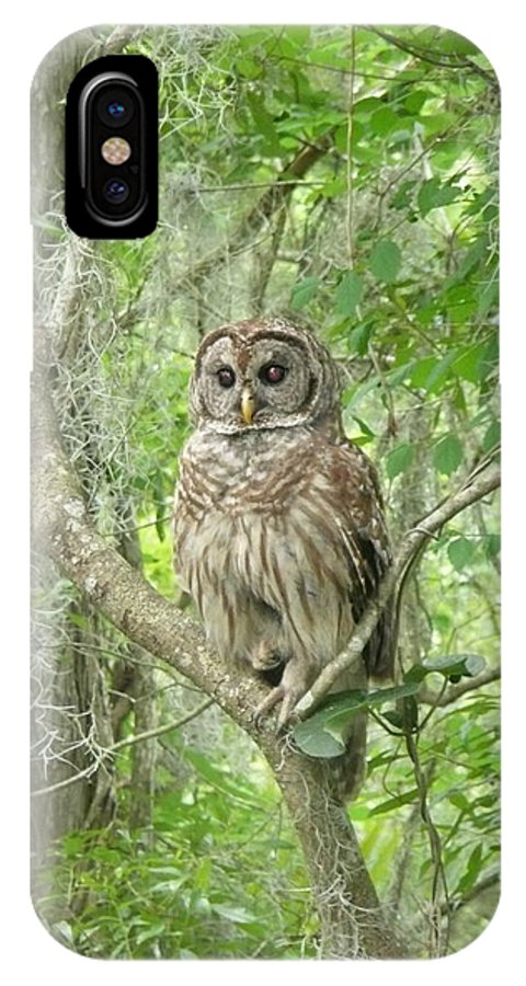 Nature IPhone X Case featuring the photograph Barred Owl I by Kathy Schumann