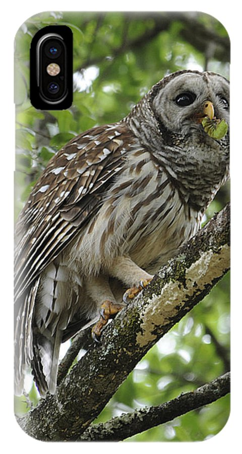 Barred Owl IPhone X Case featuring the photograph Barred Owl With A Snack by Keith Lovejoy