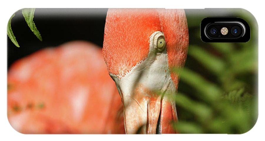 Flamingo IPhone X Case featuring the photograph Bashful by Cathi Abbiss Crane